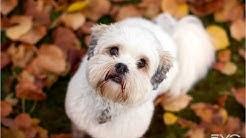 Evo Dog Food Test For Eating