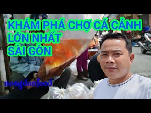 Khám Phá Chợ Cá Cảnh Lớn Nhất Sài Gòn Vào Buổi Sáng