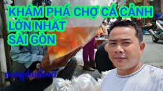 Chợ Cá Cảnh Lớn Nhất Sài Gòn Vào Buổi Sáng