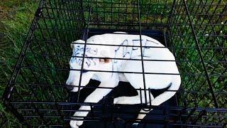 Посреди парка люди увидели собаку в клетке, приблизившись к ней они были шокированы