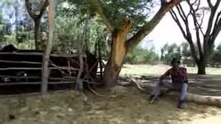 **New **oromo music by Hacalu hundesa