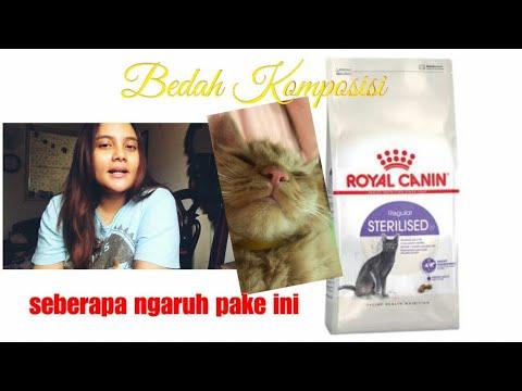 Review Royal Canin Sterilized, apa efektif untuk kucing yang sudah steril dan harus diet kegemukan??
