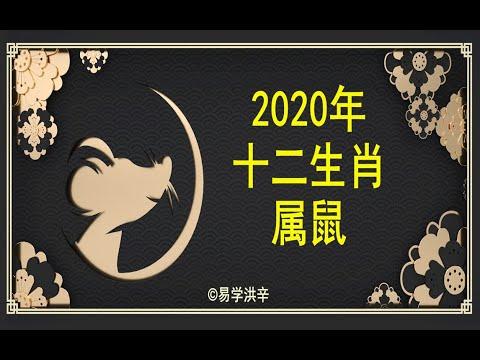 【12生肖2020年运势运程】生肖属鼠的人2020年运程详解 易学洪辛老师