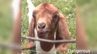 Супер Видео Хит Милые Животные Топ лучшие шутки