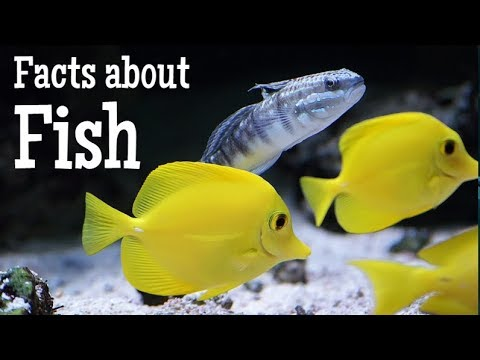 Facts About Fish For Kids