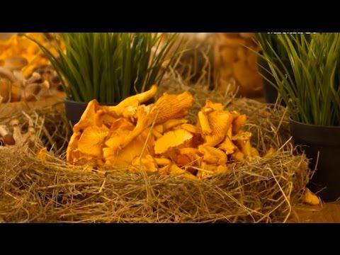 Грибы. Отравление грибами-двойниками