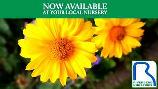 Many Organic Soils & Fertilizers Available at Riverbend Nurseries