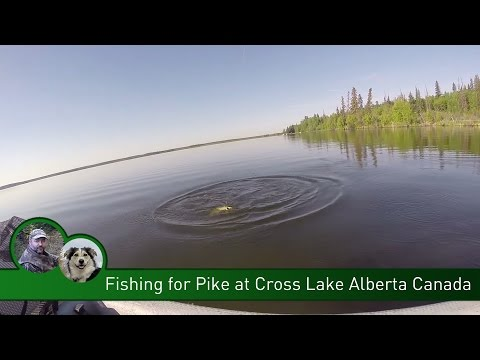 Fishing For Pike At Cross Lake Alberta Canada