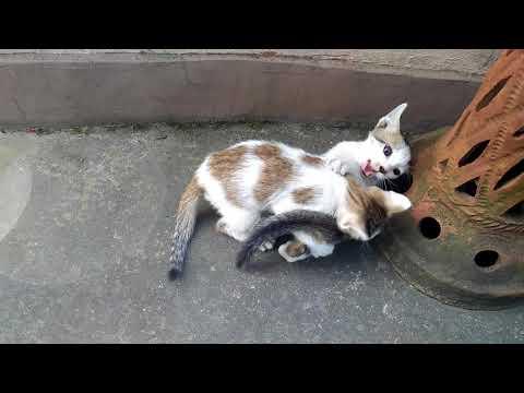 Pretty Kittens Playing & Wrestling