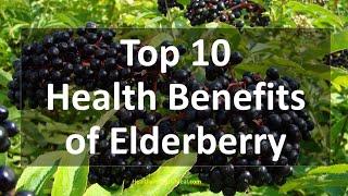 Top 10 Health Benefits of Elderberry | Healthy Wealthy Tips