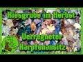 Kiesgrube im Herbst - Verregneter Karpfenansitz