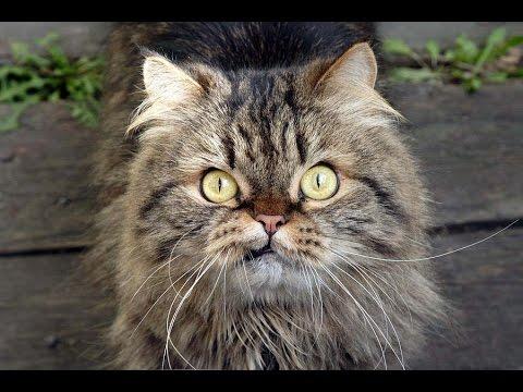 Кошачьи приколы, смешные коты и ржачные подписи к фото котов