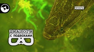 Большие рыбы в большом озере   Диалоги с подвохами