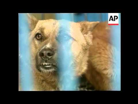 SOUTH KOREA: PROTESTS AGAINST SALE OF DOG MEAT