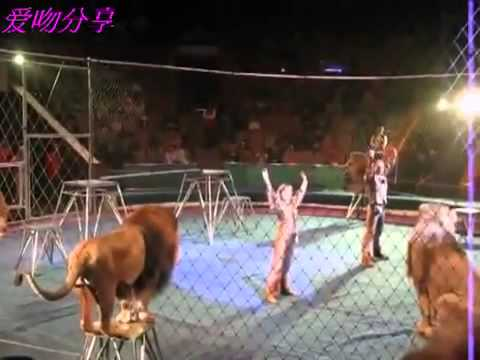 Circus Gone Wrong Crazy Lions Attack