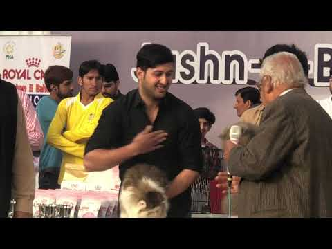 All Breed Cat Show Lahore 24 March 2019