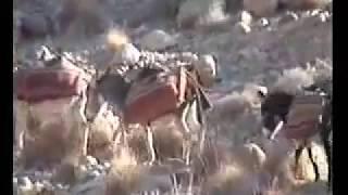 Baloch Sarmachars (Baloch Freedom Fighters)