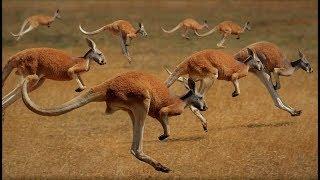 Australien - Eldorado der Natur [Doku]