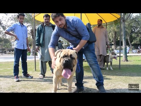 Crazy prank tv Collaboration Hsn Entertainment Dog show  Lahore top 10 dogs in world