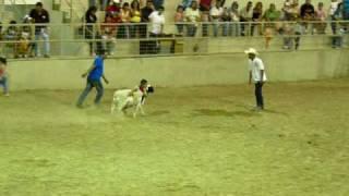 Monta de borrego de niños - Rodeo de la Expo Feria Guadalupe 2009