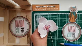 Wafer Paper Flower Orchid for Cake Decorating (tutorial)