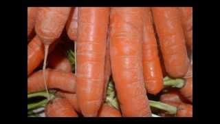 Carrot diet, medicinal plants
