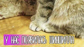 VLOG У нас появилась ШИНШИЛЛА (Перезалив) 11.11.2016