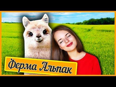 видео: САМЫЕ НЯШНЫЕ СУЩЕСТВА ♥ Ферма Альпак