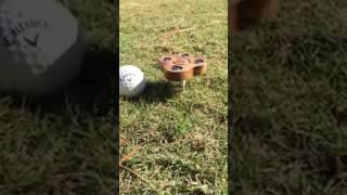 Спиннерlol #1| спиннер играет в гольф лучше чем я | spnnrtdy