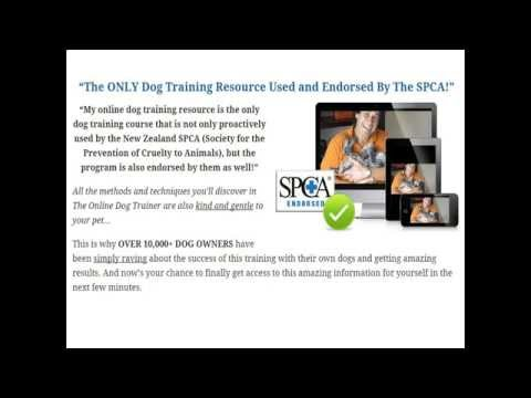 How To Train A Puppy By Doggy Dan's The Online Dog Trainer Review
