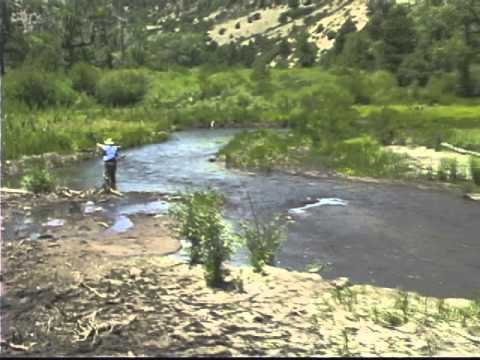 Fly Fishing The Cimarron River, NM