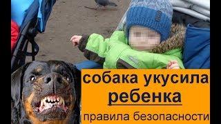Собака укусила ребенка  правила безопасности  или почему пес кусает детей