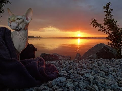 Crazy personality of Sphynx cat CASPER enjoying the sunset