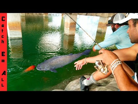 GIANT FISH Takes our COLORFUL FISH on the LINE while Fishing in CRYSTAL CLEAR WATER!