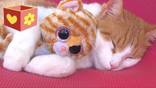 Download Cute Cat part two | Video for children and toddlers | Bellboxes |  Funny cat Simba aww   part 2 Mp3 and Videos