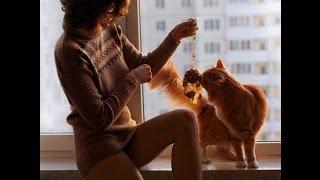 Смешные картинки про кошек и котят Выпуск № 25 FUNNY CATS  СМЕШНЫЕ КОШКИ