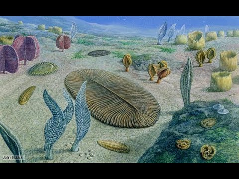The Cambrian Explosion Pt. 1