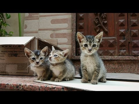 Little kittens meowing and playing