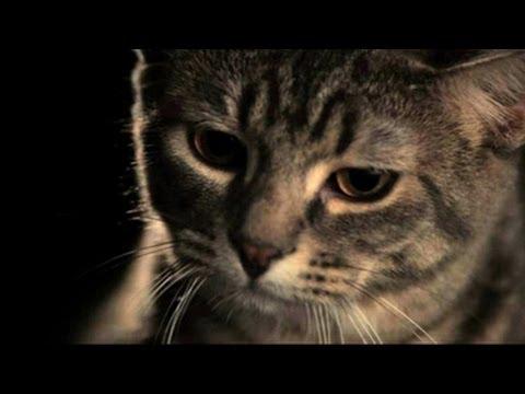 Katze - Schulfilm Biologie