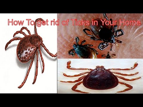 How To Get Rid Of Ticks In Your Home
