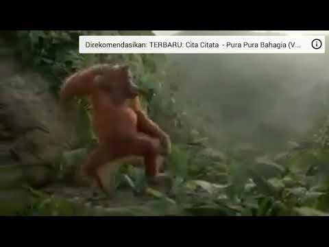 Tak tung tuang aku belum mandi dance monyet