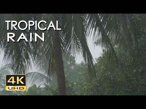 4K Tropical Rain Sounds \u0026 Relaxing Nature Video - Sleep/ Relax/ Study/ Meditate - Ultra HD