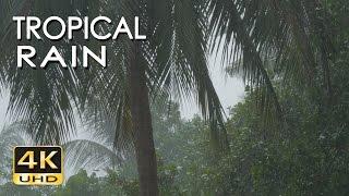 4K Tropical Rain Sounds & Relaxing Nature Video - Sleep/ Relax/ Study/ Meditate - Ultra HD