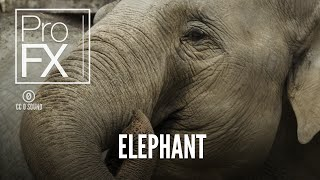 Elephant sound effect | ProFX (Sound, Sound Effects, Free Sound Effects)