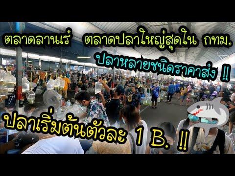 ตลาดลานเร่ วันพุธ .. ตลาดปลาสวยงามที่ใหญ่ที่สุดใน กทม .. ปลาเริ่มต้นตัวละ 1 บาท เท่านั้นนน