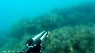 Подводная охота.Черное море.Горбыль 2015 ,Лазаревское