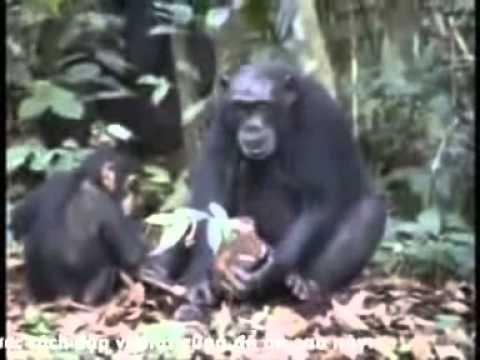 TH Sinh học 11: Tập tính của động vật. THPT Đà Bắc - Hòa Bình