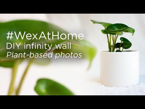 #WexAtHome | Plant-based photography | DIY Infinity Wall