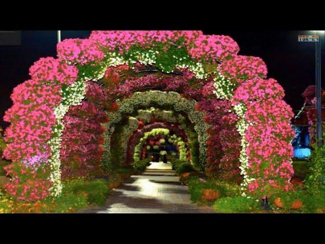 Dubai Miracle Garden 2019 Youtube