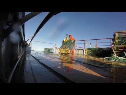 "Offshore lobster fishing - Gulf of Maine ""Wreaking Bloody Havok"" Commercial Fisherman- joelwoods.net"